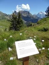 wilderswil-schynige-platte-224