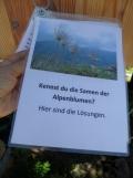 wilderswil-schynige-platte-243