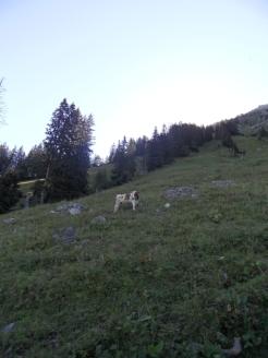 wilderswil-schynige-platte-37