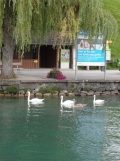 brienzersee-thunersee-130