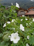 brienzersee-thunersee-86