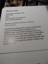 1-galerie-de-la-mediterranee-51