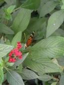 1-serre-aux-papillons-1