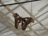 1-serre-aux-papillons-12