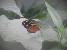 1-serre-aux-papillons-2