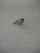 1-serre-aux-papillons-3