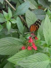 1-serre-aux-papillons-4