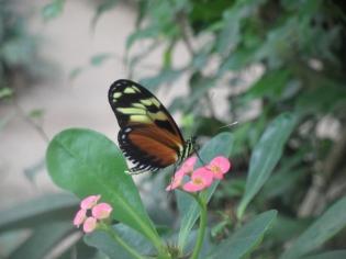 1-serre-aux-papillons-5