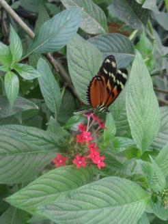 1-serre-aux-papillons-6