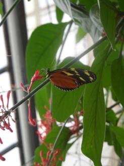 1-serre-aux-papillons-7