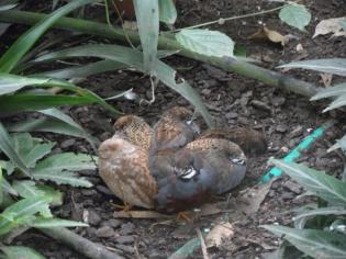 1-serre-aux-papillons-8