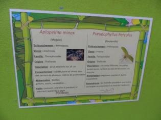 la-serre-aux-papillons-110