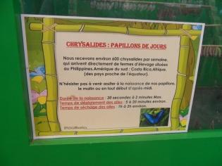 la-serre-aux-papillons-23
