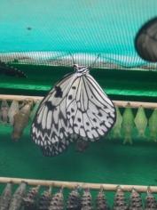 la-serre-aux-papillons-24