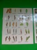 la-serre-aux-papillons-25