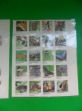 la-serre-aux-papillons-26