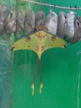 la-serre-aux-papillons-31