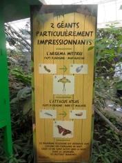 la-serre-aux-papillons-33