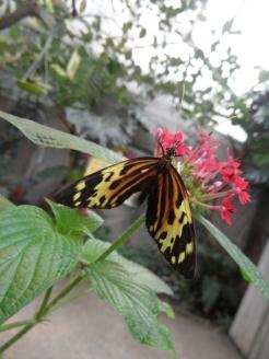 la-serre-aux-papillons-38