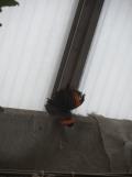 la-serre-aux-papillons-41