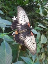 la-serre-aux-papillons-45