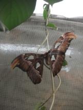 la-serre-aux-papillons-46