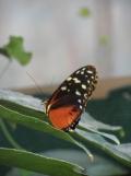 la-serre-aux-papillons-49