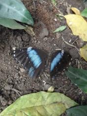 la-serre-aux-papillons-54