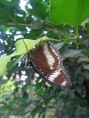la-serre-aux-papillons-57