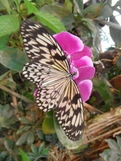 la-serre-aux-papillons-60