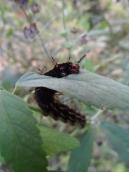 la-serre-aux-papillons-75