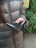 la-serre-aux-papillons-76