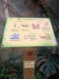 la-serre-aux-papillons-8