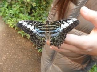 la-serre-aux-papillons-80