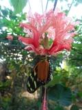 la-serre-aux-papillons-85