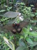 la-serre-aux-papillons-9
