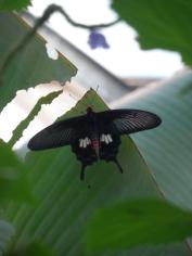 la-serre-aux-papillons-91