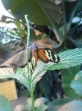 la-serre-aux-papillons-93
