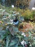 la-serre-aux-papillons-94
