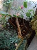 la-serre-aux-papillons-95