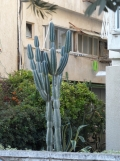 5. Tel Aviv (11)