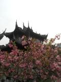 Autour de Yuyuan (148)