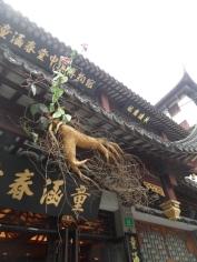Autour de Yuyuan (16)