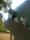 La Villa Savoye - Le Corbusier (9)