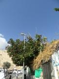 City of David (7)
