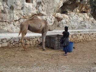 Gethsemane (17)
