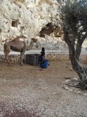 Gethsemane (18)