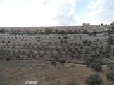 Gethsemane (32)