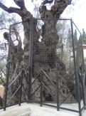Gethsemane (68)