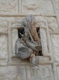 Gethsemane (7)
